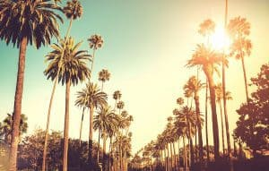 Palm lining the street of Beverley Hills as the sun shines brightly