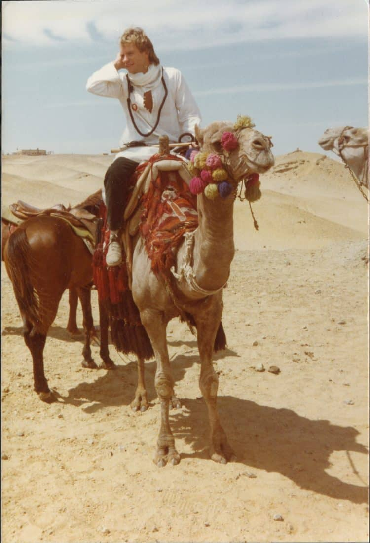 Sting on a camel in Cairo