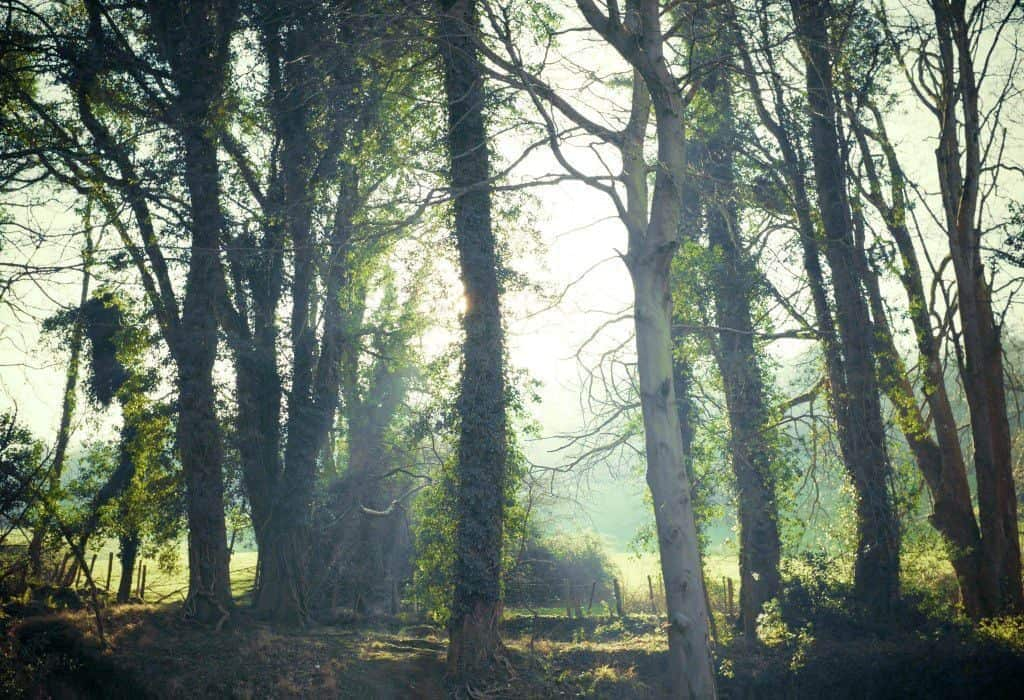 A sun drenched forest