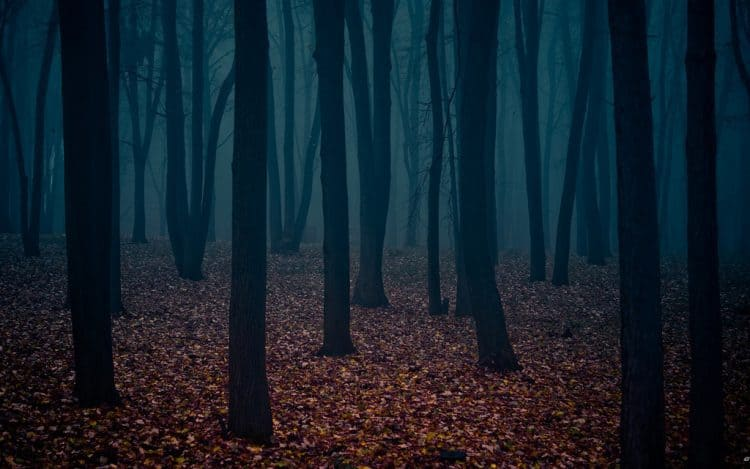 A dark and foreboding forest