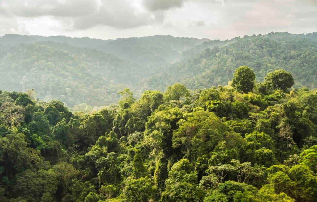 A dense rainforest landscape