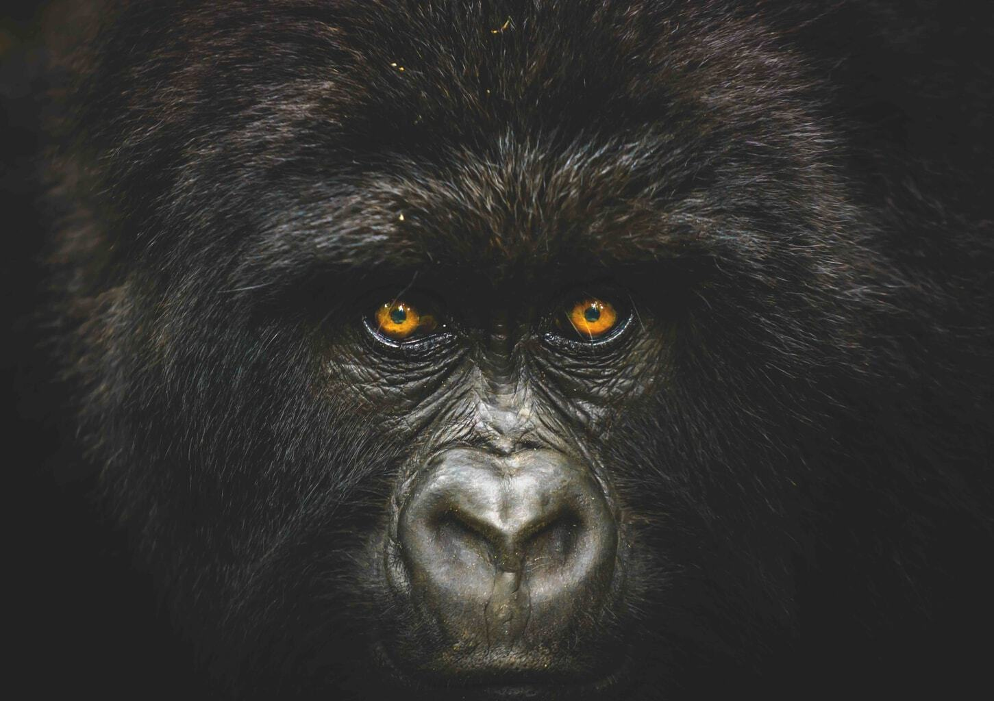 Into the congo - National Geographic Traveller Photography Competition