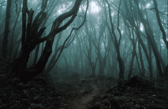The Hoia Baciu forest at night