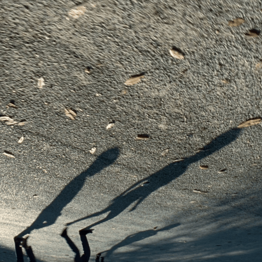 Shadows on the ground from a scene in the film Tree of Life