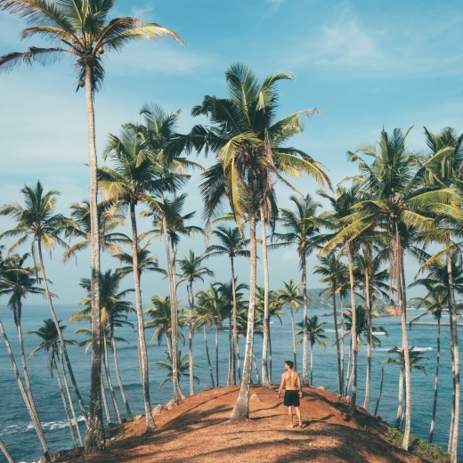A man stands surrounded by coconut trees